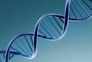Genética – Epigenética